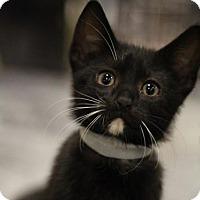 Adopt A Pet :: Clint - Sacramento, CA