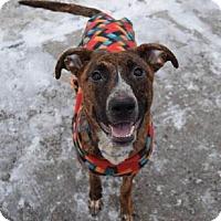 Adopt A Pet :: Moe - Bridgewater, NJ