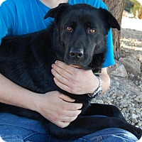 Adopt A Pet :: Macbeth - Las Vegas, NV