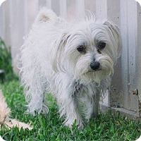 Adopt A Pet :: Tiffany - San Leon, TX