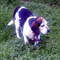 Adopt A Pet :: STELLA - Pennsville, NJ