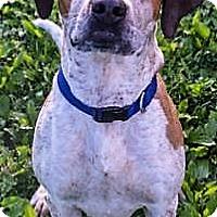 Adopt A Pet :: Tanner - Fairfax, VA