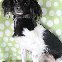 Adopt A Pet :: Zoey - Wytheville, VA