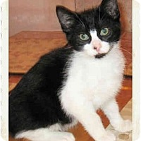 Adopt A Pet :: Sherlock - Catasauqua, PA