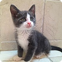Adopt A Pet :: Vicky - East Hanover, NJ