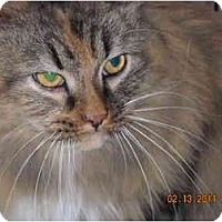 Adopt A Pet :: Roxy - Riverside, RI
