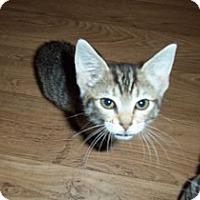Adopt A Pet :: Simone - Catasauqua, PA