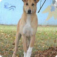 Adopt A Pet :: Tessa - North Little Rock, AR