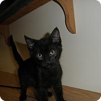 Adopt A Pet :: Wasabi - Milwaukee, WI
