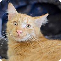 Adopt A Pet :: Garfield - Apopka, FL