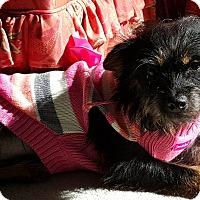 Adopt A Pet :: Layla - Lawrenceville, GA