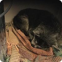 Adopt A Pet :: Kinkers - Milton, FL