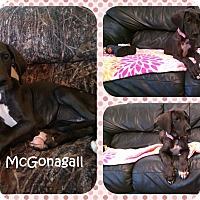 Adopt A Pet :: Minerva McGonagall - DOVER, OH