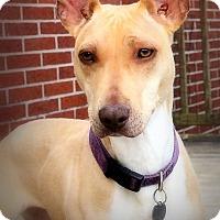 Adopt A Pet :: Tawny - Toledo, OH