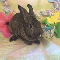 Adopt A Pet :: Metzner - Paramount, CA