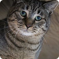 Adopt A Pet :: Jind - Colorado Springs, CO