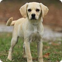 Adopt A Pet :: Hondo☘💚 ADOPTED! - Branchburg, NJ