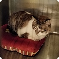 Adopt A Pet :: Jarvis - Geneseo, IL