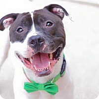 Adopt A Pet :: Murphy - Grand Rapids, MI