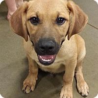 Adopt A Pet :: Oliver - Snow Hill, NC