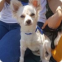 Adopt A Pet :: Jericho - Oakland, CA