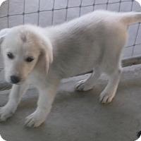 Adopt A Pet :: Jubilee - Bonifay, FL