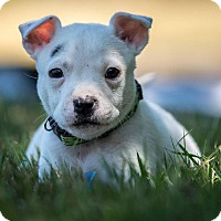 Adopt A Pet :: TYRONE - Fort Worth, TX
