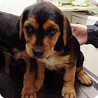Adopt A Pet :: Cindy - Silsbee, TX