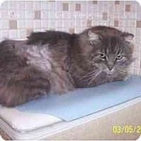 Adopt A Pet :: Zak: Gorgeous, in URGENT Need - Quincy, MA