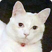 Adopt A Pet :: Squeakers - Irvine, CA