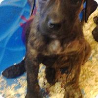 Adopt A Pet :: ROBYN LITTER #1 - Pompton Lakes, NJ
