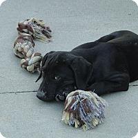 Adopt A Pet :: Bert - Columbus, IN