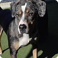 Adopt A Pet :: Jax - Lakeland, FL