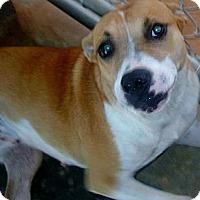 Adopt A Pet :: Flo - dawson, GA