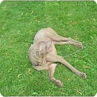 Adopt A Pet :: Winston - Attica, NY