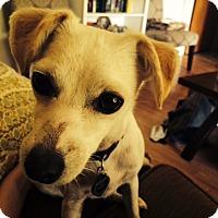 Adopt A Pet :: Lili - Bryan, TX