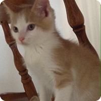 Adopt A Pet :: Snickerdoodle - Trevose, PA