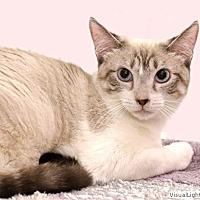 Adopt A Pet :: Morgan - Westchester, CA