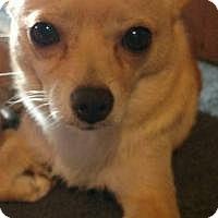 Adopt A Pet :: Lacey - Marlton, NJ