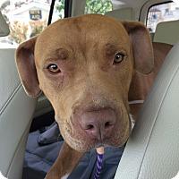 Adopt A Pet :: Henna - West Hills, CA