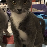 Adopt A Pet :: Pinot - Turnersville, NJ