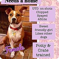 Adopt A Pet :: PRINCESS - Terra Ceia, FL