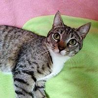 Adopt A Pet :: Abba - Hermosa Beach, CA