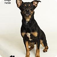 Adopt A Pet :: Diego - Baton Rouge, LA