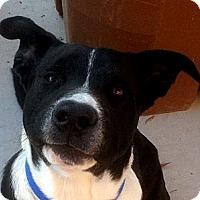 Adopt A Pet :: Leo - Courtesy Listing - Oakley, CA