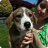 Adopt A Pet :: Dee Dee - South Jersey, NJ