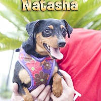 Adopt A Pet :: Natasha - Fountain Valley, CA