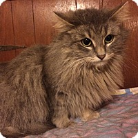 Adopt A Pet :: Channing - Delmont, PA