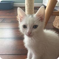 Adopt A Pet :: Diamond - Union, KY