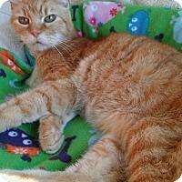 Adopt A Pet :: Mandarin (no adoption fee) - Witter, AR